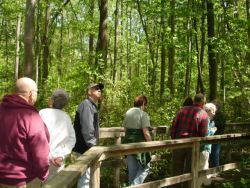 Tour Group on Bridge in Forested Area