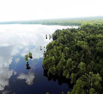 GreatDismalSwamp_newsflash