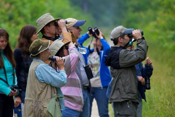 Birding at Great Dismal Swamp