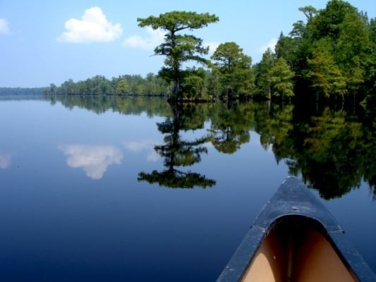 Canoeing Lake Drummond
