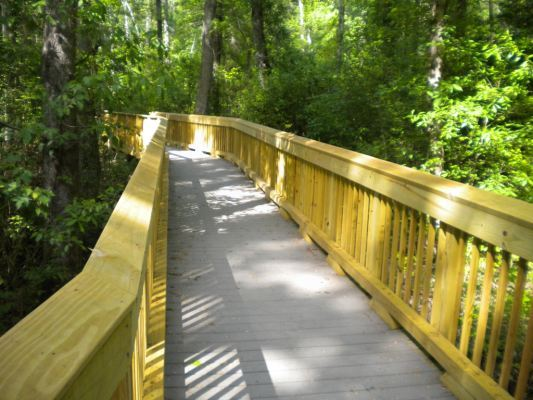 Washington Ditch Boardwalk at Great Dismal Swamp